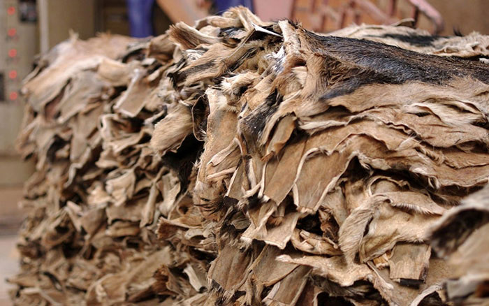 Sản xuất áo da lộn trải qua các công đoạn thuộc da phức tạp